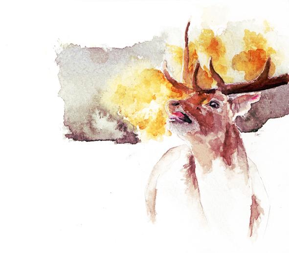 ilustracion acuarela ciervo