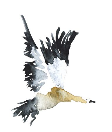marina_eiro_illustration_watercolor_brown_duck